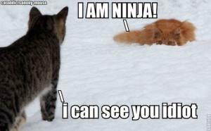 am a ninja!