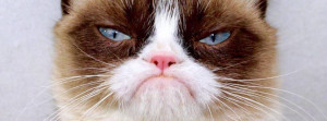 cat is on facebook to connect with the official grumpy cat sign up for ...