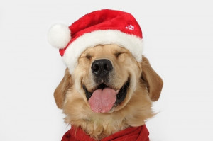 Dogs in Christmas Costumes « Read Less