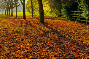 October Poems and quotes 8