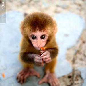 cute+monkey3.jpg#cute%20monkey%20500x500
