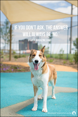 AS DOGS WOULD SAY: QUOTE 15