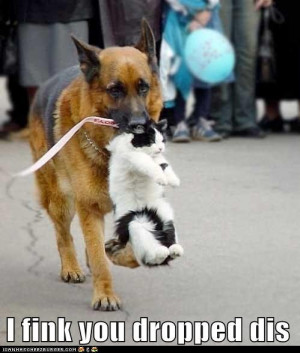Funny cats vs funny dogs .