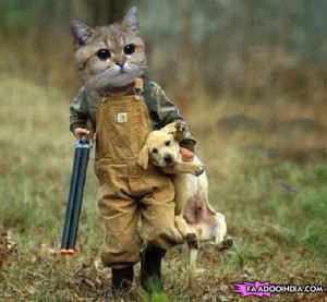 Like a boss : Cat hunting dog