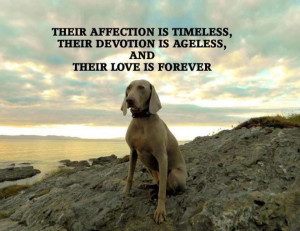 ... Weimaraner Love, Animals Friends, True Love, Animals Quote, Weimeran