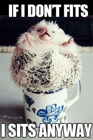 Funny Hedgehog Picture...