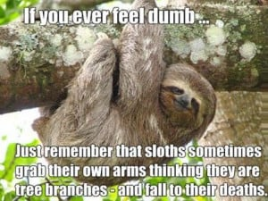... funny pictures humor lol sloth leave a reply what rhymes with sloth