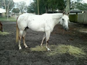 Trail Horses Baymountfarm Blog