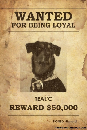 Faithful Dog Quotes http://www.pinterest.com/pin/522839837960146466/