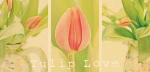 Love You Tulips Tulips with you.