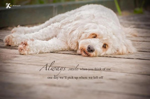 Dog Quotes And Poems