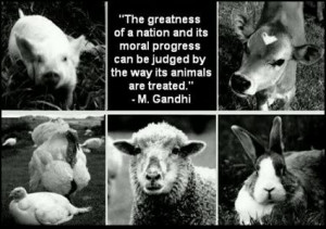 Please - Be A Voice For The Voiceless!