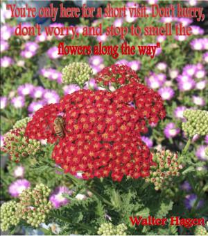 Walter E Williams Quotes Walter hagen gardening quote