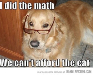 Funny photos funny dog Golden glasses smart