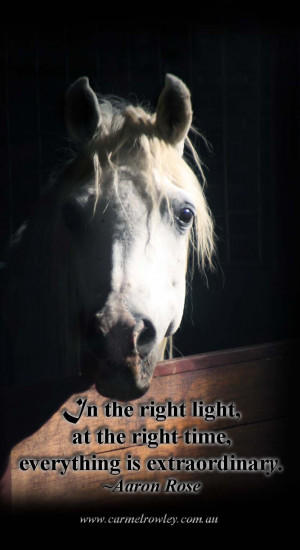 quotes on losing a horse quotesgram