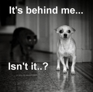 The cat is behind me, isn't it?