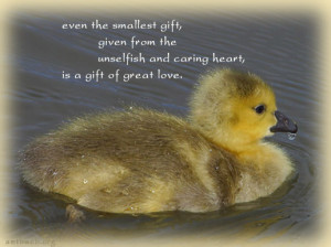 ... the unselfish and caring heart is a gift of great love unknown love is