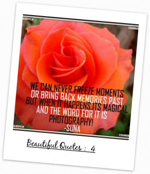 photography+quotes+roses+quotes+orange+rose+beautifull+quotes+about ...