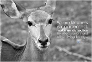 vegan_quote.jpg