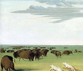 ... hunting bison (George Catlin). Courtesy of Smithsonian Institution