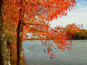 Fall Equinox - Yoga Mala