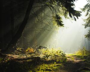 Fonds d'écran avec oblique merveilleuse forêt sauvage de la nature