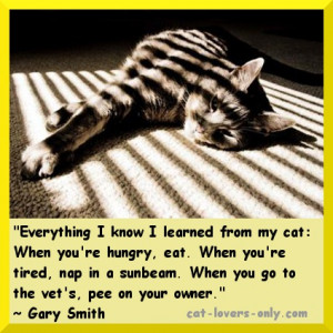 nermy-tabby-cat-in-the-sun-with-quote.jpg