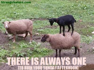 funny animals pictures with quotes. Funny Sheep standing on top of