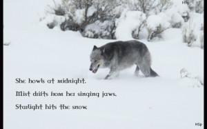 wolf wisdom - friendship, white, grey wolf, wild animal black, quotes ...