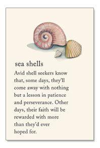 sea shells More