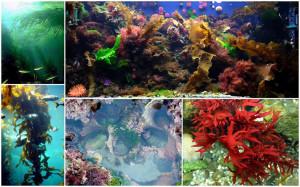 Marine Plants