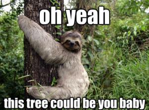 Funny-Sloth-Memes-15.jpg