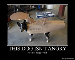 dog funny videos dog funny quotes dog pictures dog jokes cat funny ...
