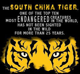 Interesting Facts About the South China Tiger