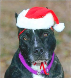funny-life-quotes-cute-sad-dog-christmas-hat.jpg