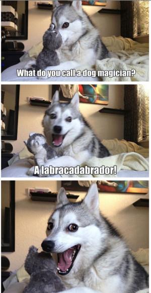 Pun Dog Meme Husky Pun dog - image #711,367