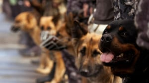 Military dogs being diagnosed with post-traumatic stress disorder