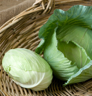 cabbage tendersweet f1 cabbage tundra chinese cabbage china gold