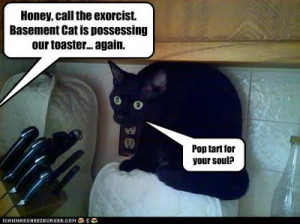 funniest cat captions and quotes, funny cat captions and quotes
