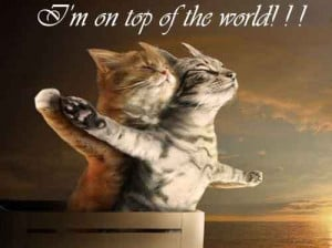 Quotes About Loving Your Cat http://weheartit.com/entry/44410580