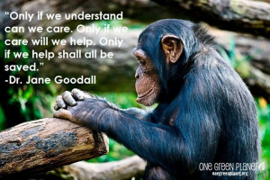 ... we care will we help only if we help shall all be saved jane goodall
