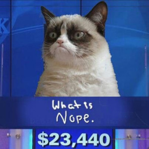 Angry kitty & jeopardy