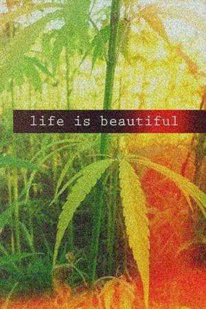 Rasta Sayings #rasta #life #my #life