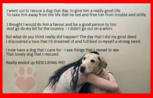 quote animal rescue quote pet quotes dog quotes and sayings