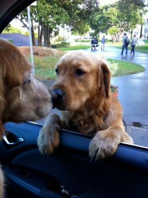 Funny Goodbye Animals Dog had to say goodbye!