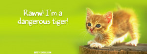 Cute, Kitten, Raww, Cat, Cats, Kittens, Animal, Animals, Adorable ...