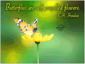 flowers-quotes-pictures04