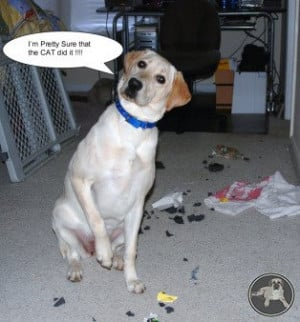 Funny Labrador Quotes