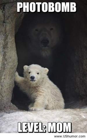 Polar bear photobomb level mom US Humor - Funny pictures, Quotes, Pics ...