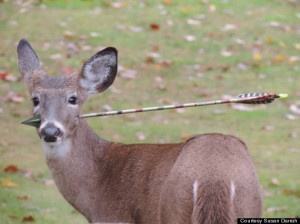 Deer With Arrow In Its Head Rescued In New Jersey (PHOTOS)